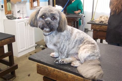 pet motel  salon charlottesville kennel cattery dog hairstyles ideas