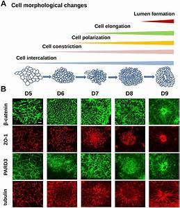 Calcium Signaling Mediates Five Types Of Cell