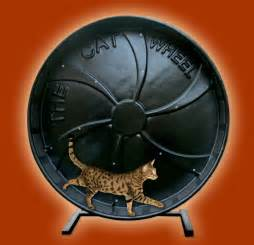 cat exercise wheel cat exercise wheel image search results