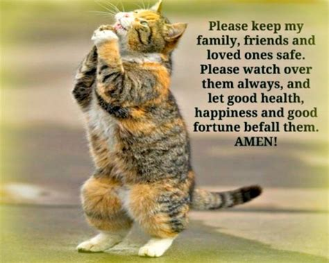 Animal Wallpapers With Quotes - prayer quotes cats animals background wallpapers on