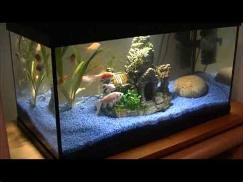 fische ins aquarium einsetzen wie setze ich fische ins aquarium ein wichtige tipps f 252 r fische ins aquarium einsetzen