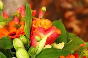 Livraison Fleurs à Domicile : parce que les fleurs dans une maison c 39 est joli ~ Dailycaller-alerts.com Idées de Décoration