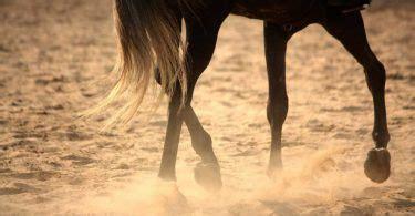 hufverletzungen bei pferden homoeopathie hilft