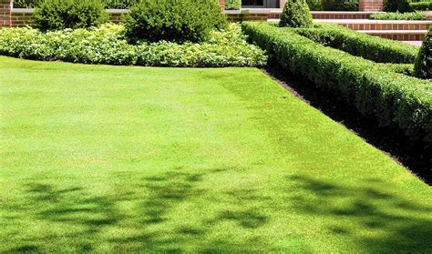 How To Grow Grass In Backyard by Bentgrass Will Take Unless You Act Here S What To Do