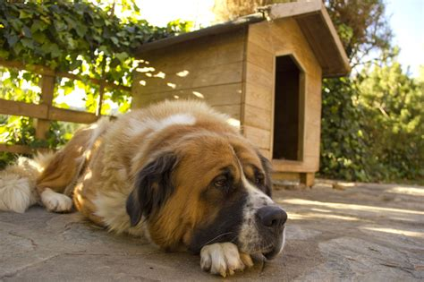 Mucus In Dog Stool