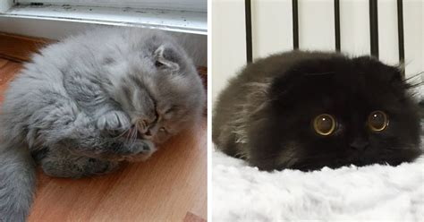 World's Cutest Kitten Ever