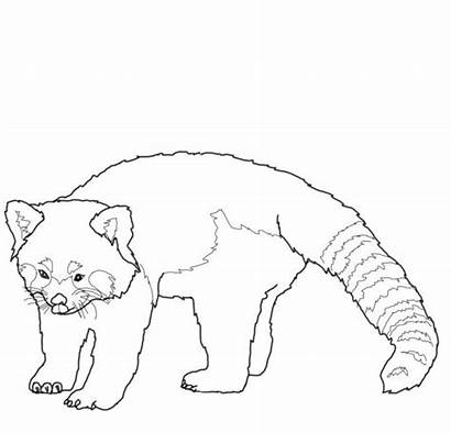 Panda Coloring Pages Printable Drawing Realistic Ranger