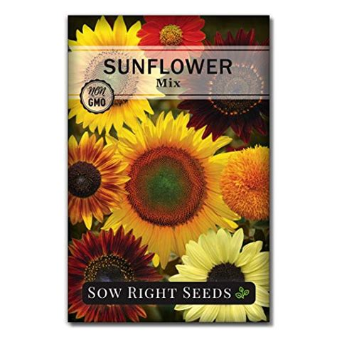 seeds planting gmo heirloom non packet mixed sunflower plant sow right gardening instructions wonderful gift sretso seed
