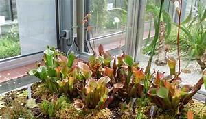 Pflanzen Für Terrarium : terrarium f r fleischfressende pflanzen mikes hobby blog ~ Orissabook.com Haus und Dekorationen