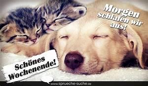 Bilder Schönes Wochenende Lustig : morgen schlafen wir aus sch nes wochenende spr che mit katze und hund spr che suche ~ Frokenaadalensverden.com Haus und Dekorationen