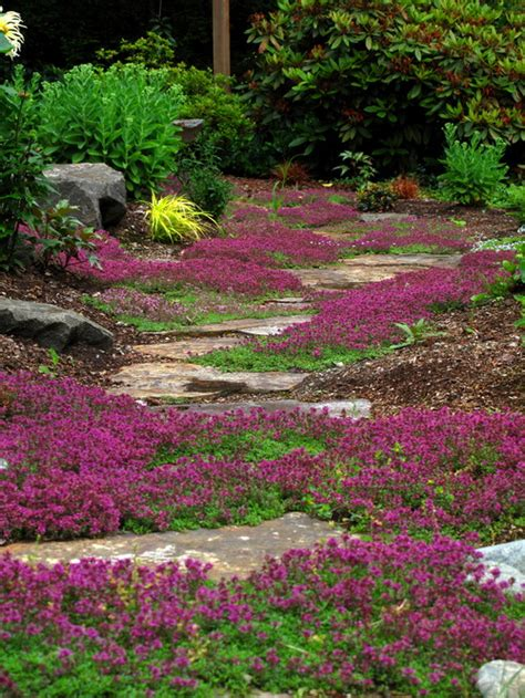 What Is The Low Growing Ground Cover With The Purple Flowers