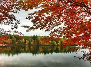 The Glengarry Sporting Club: This Is Fall: Walden Pond  Fall