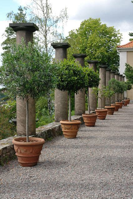 potted trees for patio potted trees garden wood boxes search and 4373
