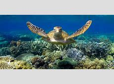Cairns Luxury Tours, Charters, Holiday Experiences & Packages