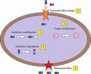 Various Mechanisms For Antibiotic Resistance In Bacteria  Gupta Et Al