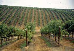 paso robles wine judd vineyards palm