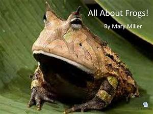 All About Frogs  Ppt