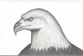 Eagle Drawing by subur...