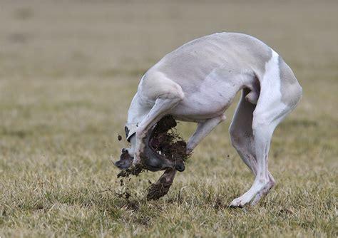 Mein Erdferkel ) Foto & Bild  tiere, haustiere, hunde