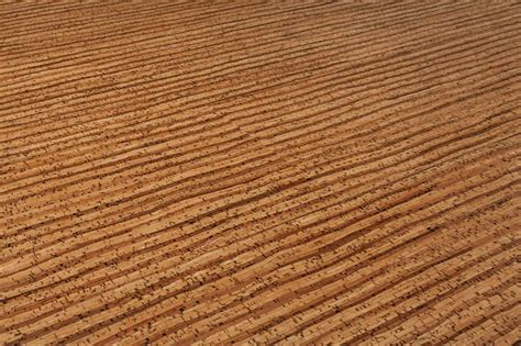 cork flooring price per square foot cork flooring cost per square foot cork floors is everything about durability comforthouse pro
