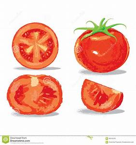 Oil Painting Tomato Stock Vector  Image Of White  Half