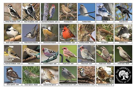 Backyard Identification by Arboretum Books Journals Biodiversity Sheets And
