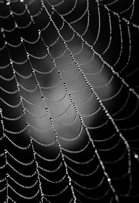 Abstract Black And White Photography Nature by Nature Photography In Black And White Tips And Exles