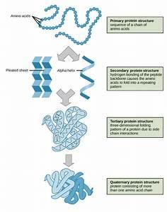 Blog  U2013 Ap Biology