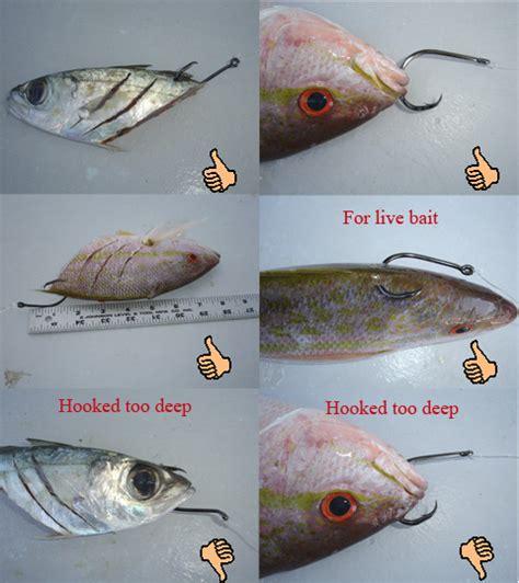 fishing grouper bait bottom rigs rig saltwater carolina fish lures sea bass water baits hook fun crappie tips well ways