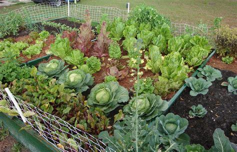 garden  eatin  practical vegetable gardening