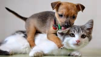 dogs and cats animal when dogs and cats in together