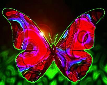 Butterfly Butterflies Kupu Animasi Gambar Bergerak Cantik