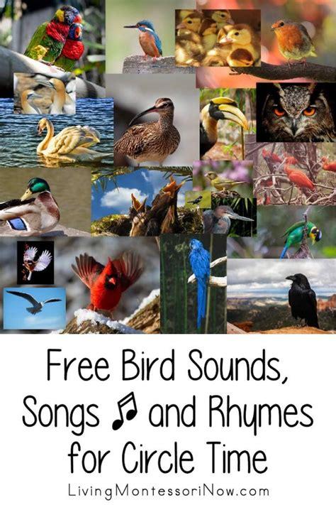 preschool bird songs and fingerplays 86 best educational songs rhymes amp fingerplays images on 689