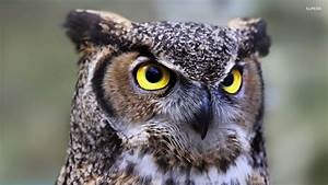 Owl history and some interesting facts