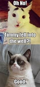 Funny Cats .. Best Funniest Cat Quotes | Quotes and Humor