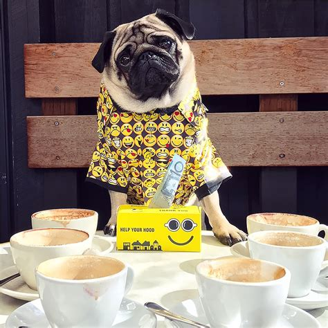 Coffee is a major source of caffeine, which can be very harmful and poisonous to dogs. National Homeless Week 2019 - Drink Coffee Do Good August ...