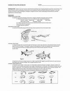 Evidence Of Evolution Worksheet Answer Key