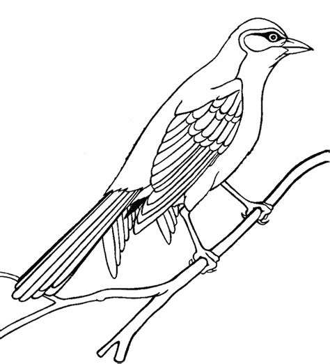 outline drawings  birds   clip art