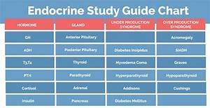 Endocrine System Study Guide