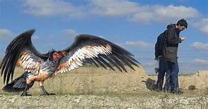 Scientists In Argentina Discover A New Species Of Condor