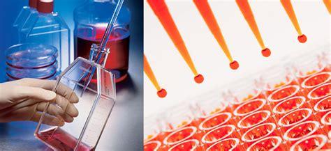 makalah bioteknologi kultur jaringan hewan lengkap