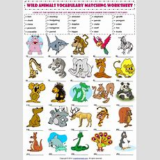 Wild Animals Esl Vocabulary Matching Exercise Worksheet