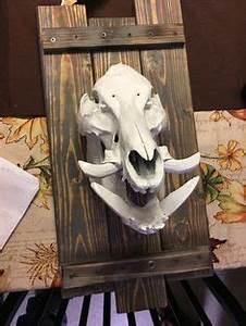 coyote skull mount - Google Search | arts/crafts ...