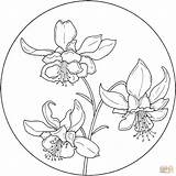Circle Coloring Flower Pages Supercoloring Pattern Flowers Columbine Printable Mel Patterns Drawing Colouring Aquilegia Stampz Mandala Jonquilles Sheets Templates Adult sketch template