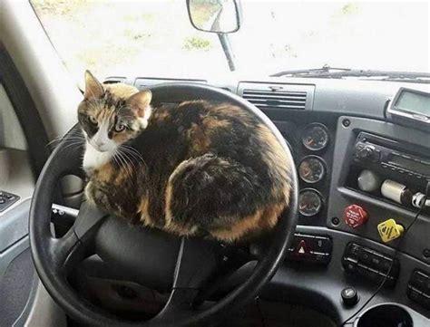 15+ fotoattēlu pierādījumi, ka kaķi var uzkāpt jebkurā ...