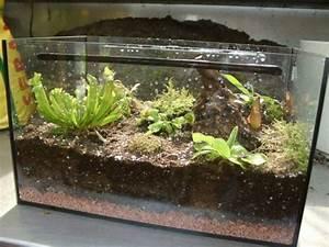 Aquarium Dekorieren Ideen : der saengerhof faszination carnivoren fleischfressende pflanzen ~ Bigdaddyawards.com Haus und Dekorationen