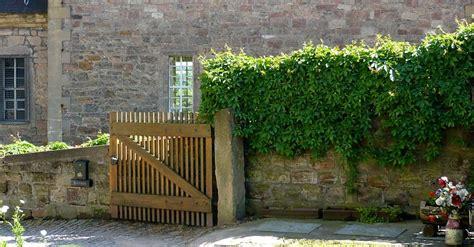 Zaun Begrünen Immergrün by Green Walls Wall Greening With And Without Climbing Trellis