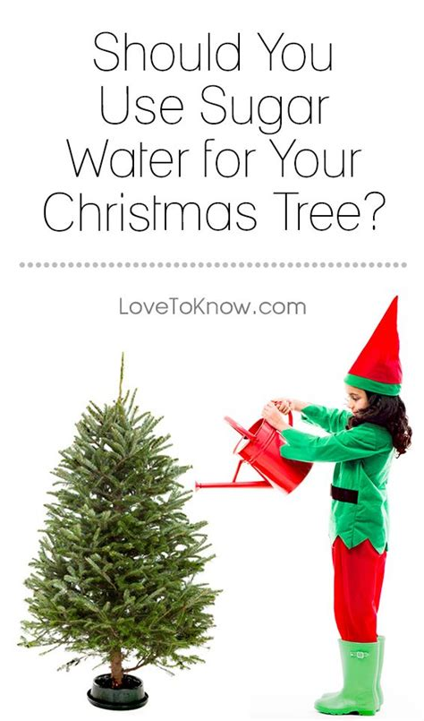 best 25 fresh trees ideas on mini tree tree lots and