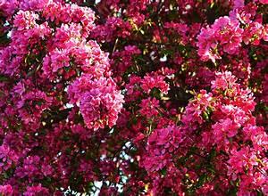 Rosa Blühende Bäume April : hintergrundbilder rosa farbe blumen bl hende b ume ~ Michelbontemps.com Haus und Dekorationen