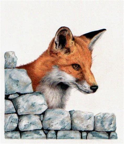 coloured pencil drawing   fox curiosity pencil